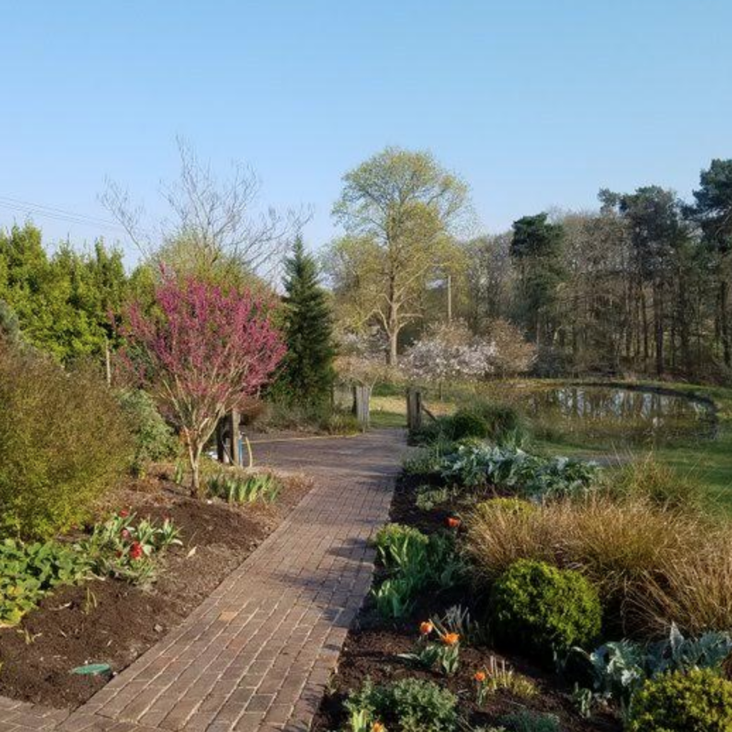 Garden, Churt, Surrey, UK at 6pm, 6th April 2020 – by Jenny Bowden